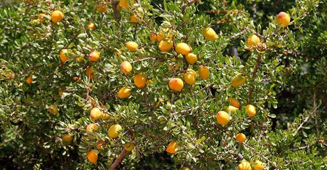 Natural Products Like Argan Is Important For The Skin