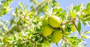 Argan Oil Has A Very Rich And Long History