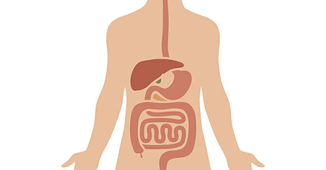 A Healthy Digestive System Means A Healthy Body