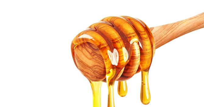 Honey Is Love, Honey Is Life