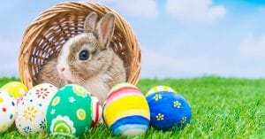The Easter Bunny Is One Of The Cutest Bunnies Ever