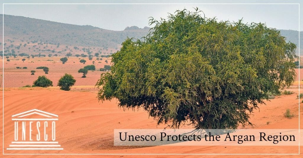 Argan trees in Morocco